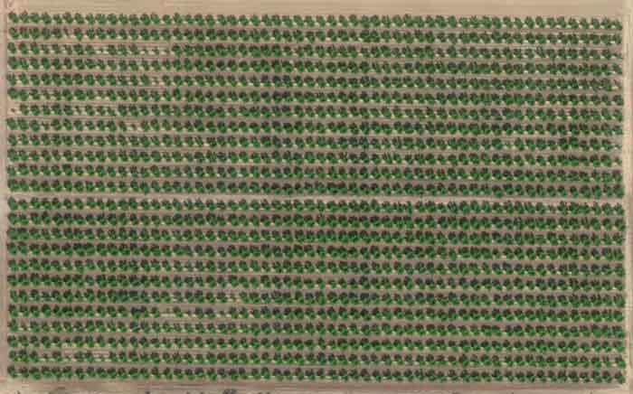 Teledeteccion Agrícola Imagen de frutales